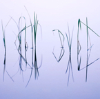 Grass-Reflections.jpg